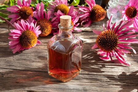A bottle of tincture with fresh echinacea flowers on a table