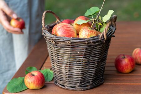A basket with apples on a table in a garden