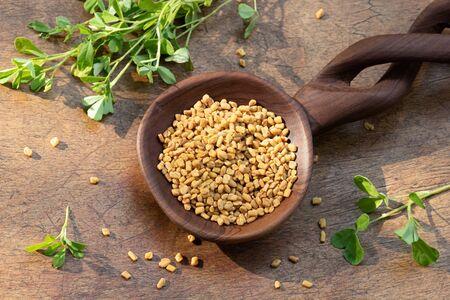 Fenugreek seeds on a wooden spoon with fresh Trigonella foenum-graecum plant Stok Fotoğraf