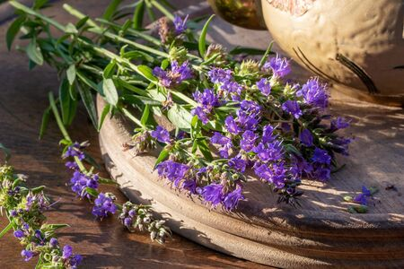 Fresh hyssop flowers on a table