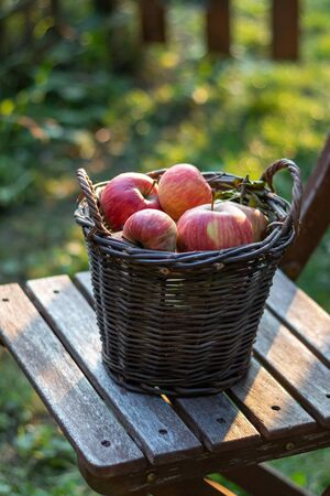 Apples in a wicker basket in a garden Stok Fotoğraf