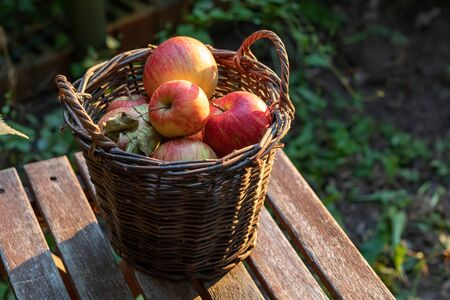 Fresh apples in a basket, outdoors
