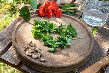 Cutting up fresh nasturtium, or Tropaeolum majus plant, to prepare herbal tincture Stok Fotoğraf