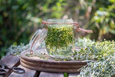 Preparation of herbal tincture from fresh blooming wormwood, or Artemisia Absinthium