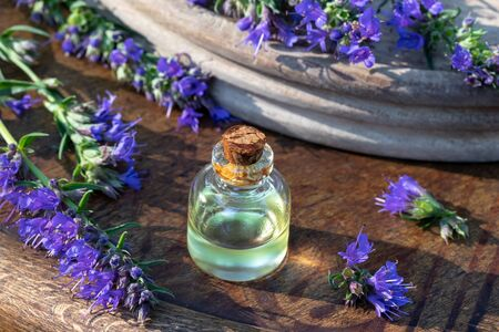 A bottle of essential oil with fresh blooming hyssop plant
