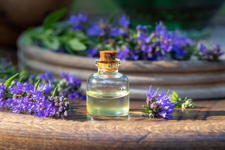 A bottle of essential oil with fresh blooming hyssop plant in the background Stok Fotoğraf