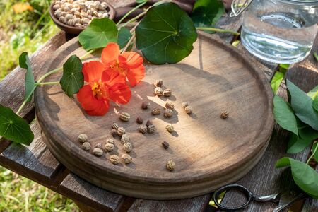 Preparation of herbal tincture from garden nasturtium seeds, flowers and leaves
