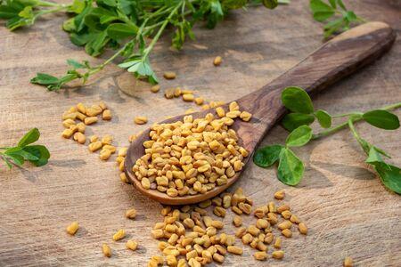 Fenugreek seeds with fresh Trigonella foenum-graecum plant on a wooden background