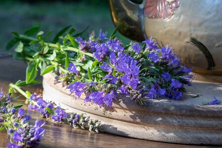 Fresh blooming hyssop plant on a table, with a teapot in the background