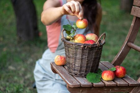 A basket with apples on a garden chair with a woman in the background, outdoors