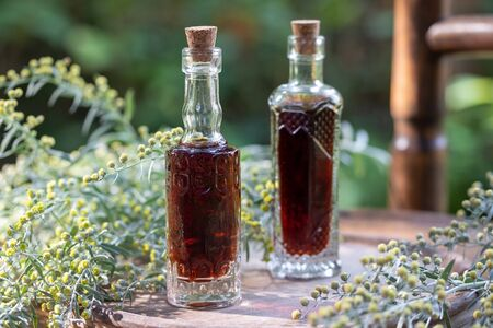 Bottles of herbal tincture with fresh blooming wormwood, or Artemisia Absinthium plant in the background