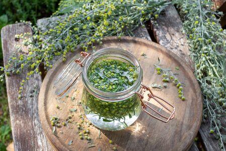 Przygotowanie nalewki z piołunu ze świeżo kwitnącej rośliny Artemisia Absinthium, outdoor Zdjęcie Seryjne