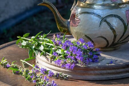 Blooming hyssop plant with a teapot in the background