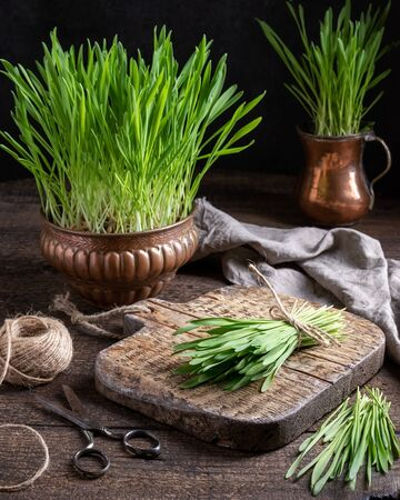 Freshly grown barley grass on a wooden table