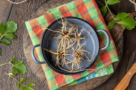 Valerian roots in a pot, with fresh leaves in the background