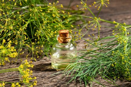 A bottle of dill seed oil with fresh blooming Anethum graveolens plant