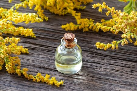 A bottle of Canadian goldenrod essential oil with blooming Solidago canadensis plant on a wooden background