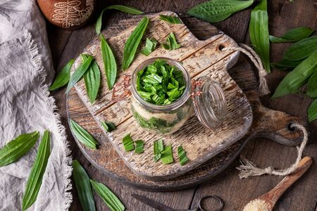 A jar filled with ribwort plantain leaves and cane sugar, to prepare herbal syrup against cough Stock fotó