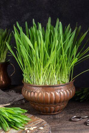 Freshly grown barley grass in a vintage copper bowl