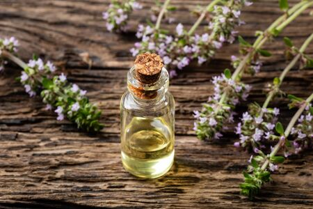 A bottle of creeping thyme essential oil with fresh blooming Thymus serpyllum plant
