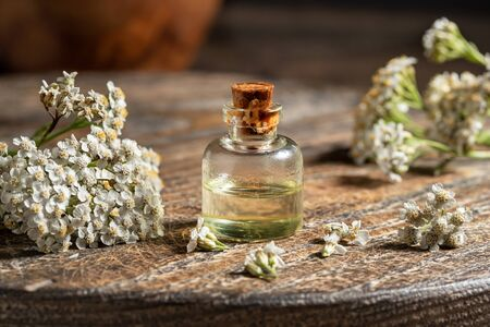 A bottle of essential oil with fresh blooming yarrow plant in the background Banco de Imagens