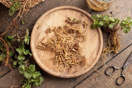 Cutting up fresh nettle root collected in early spring to prepare homemade herbal tincture