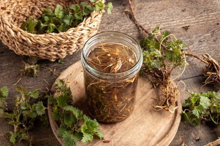 Preparation of tincture from fresh nettle root collected in early spring Stock Photo