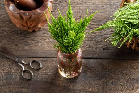 Fresh horsetail twigs in a vase on a table