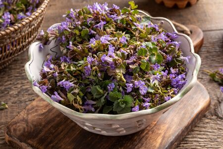 Fresh blooming ground-ivy plant in a ceramic bowl