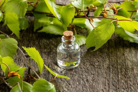 A bottle of essential oil with young birch leaves