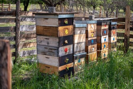Beehives standing outdoors in nature