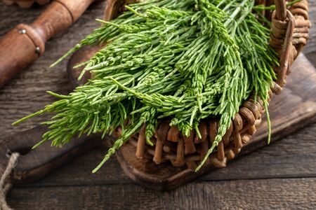 Fresh horsetail twigs in a basket on a table Imagens