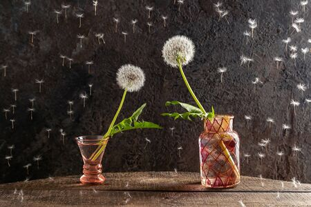 Two dandelion flowers leaning towards each other, as if reaching hands - concept of love or attraction