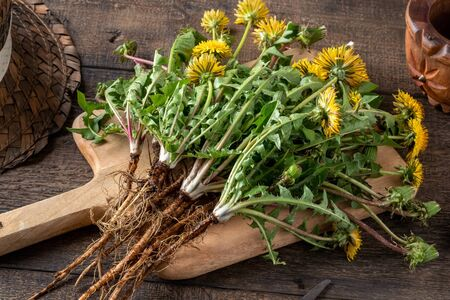 Whole dandelion plants with roots on a table