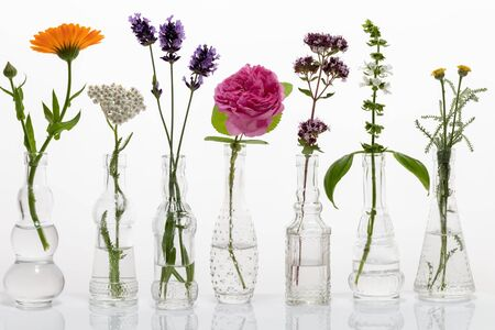 Blooming oregano, basil, santolina, rose de mai and other herbs in glass bottles against a white background