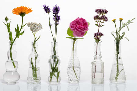 Six bottles with calendula, yarrow, lavender, cabbage rose, blooming oregano and santolina 免版税图像