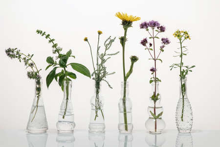 Creeping thyme, santolina, elecampane, common rue and other herbs in glass bottles on a bright background Reklamní fotografie