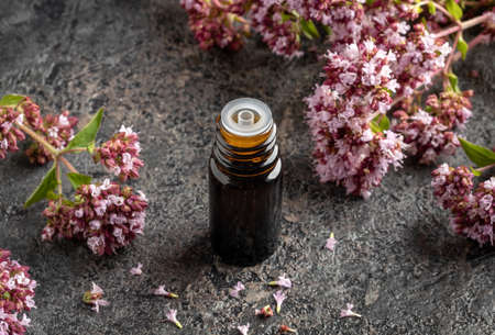A bottle of essential oil and fresh blooming oregano plant