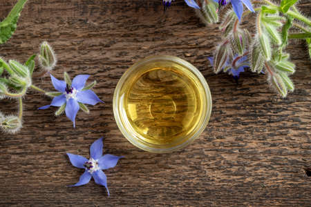 A bowl of borage oil with fresh plant, top view Reklamní fotografie
