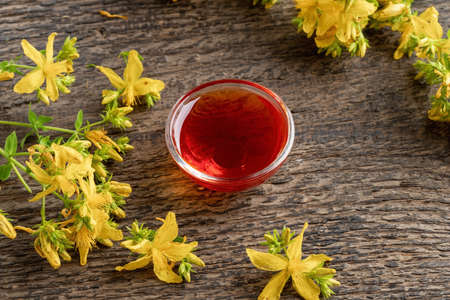 St. John's wort oil in a bowl, with fresh flowers Reklamní fotografie