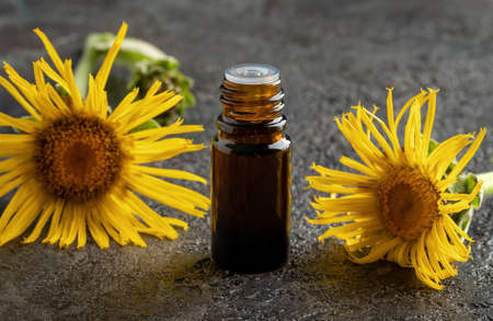 A dark bottle of elecampane essential oil on a table