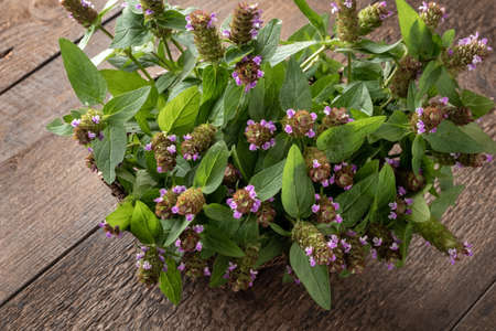 Fresh blooming common self-heal, or Prunella vulgaris plant on a table