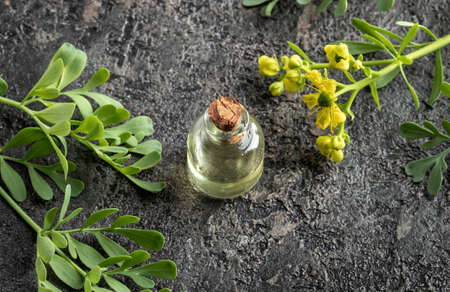 A bottle of essential oil with fresh blooming Ruta graveolens plant Reklamní fotografie