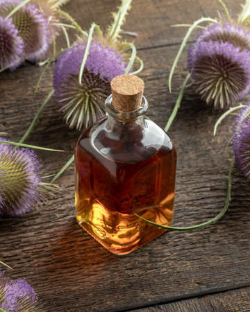 A transparent bottle of herbal tincture with wild teasel flowers