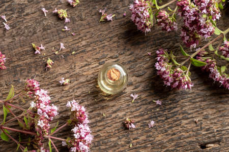 A transparent bottle of essential oil with blooming oregano on a wooden background Standard-Bild
