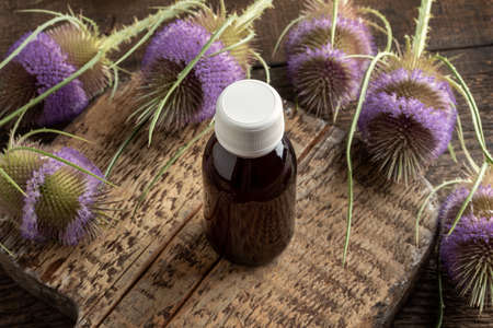 A bottle of herbal tincture with wild teasel flowers on a table