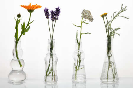 Blooming santolina, calendula, lavender and yarrow in glass bottles against a white background