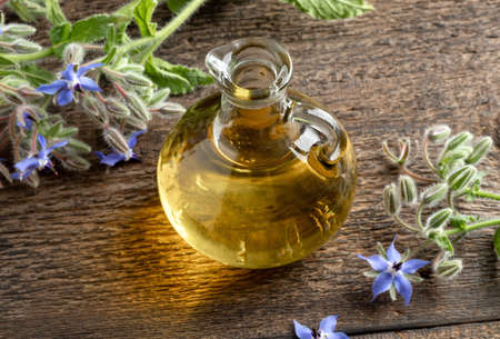 A bottle of borage oil with fresh starflower plant