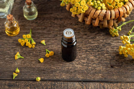 A dark bottle of common tansy essential oil with fresh blooming Tanacetum vulgare plant Standard-Bild