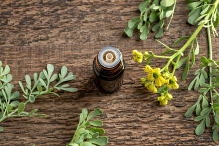 A bottle of essential oil with blooming common rue, or Ruta graveolens plant